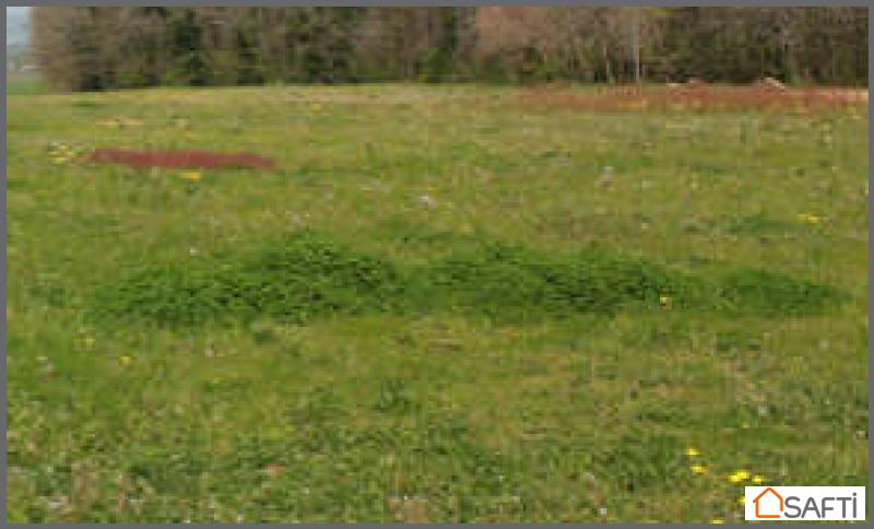 achat terrain belleville sur meuse 55430 728m safti. Black Bedroom Furniture Sets. Home Design Ideas